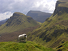 Thumbnail of Sheep watching as Natalie hikes in the Quirang, Isle of Skye, Scotland